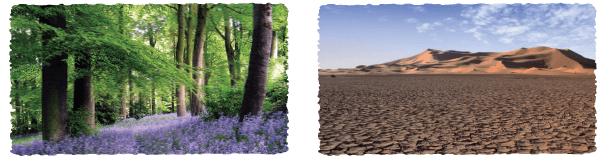 8-sinif-dikey-yayinlari-turkce-kitabi-agac-sevgisi-6-etkinlik-cevaplar