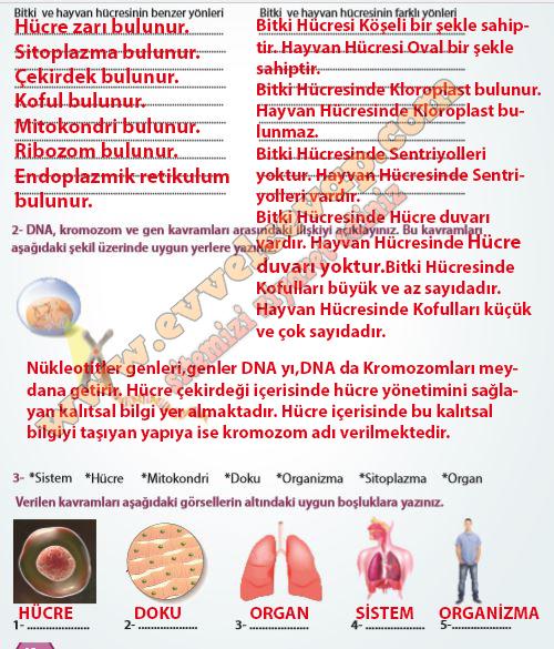 7 Sinif Fen Bilimleri Meb Yayinlari Ders Kitabi Cevaplari Sayfa 60
